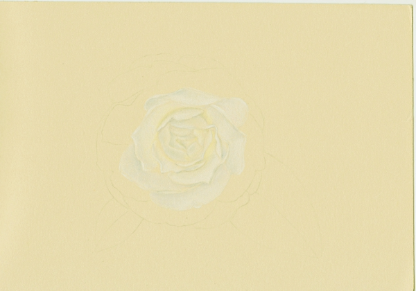 camellia_02