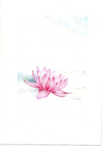 waterlily_03