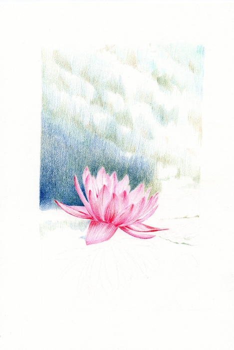 waterlily_04
