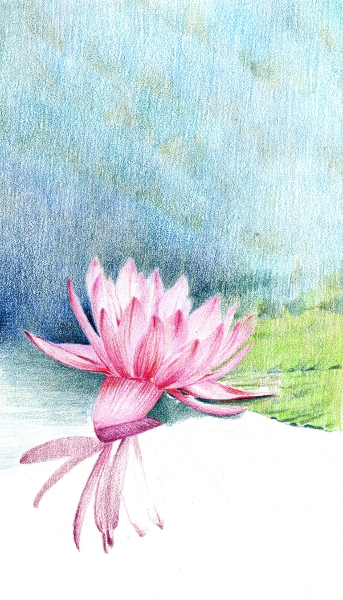 waterlily_06
