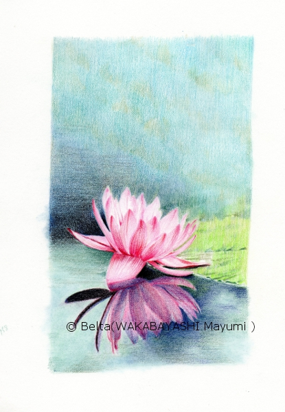 waterlily_08_s
