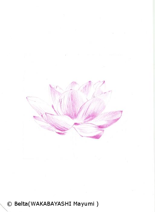 lotus_01_s