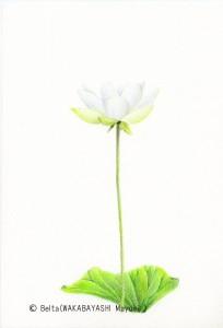 lotus_02_s