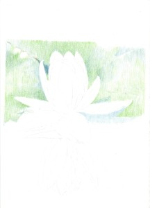 waterlily_01_s