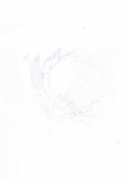 2014_10_01_cosmos_01