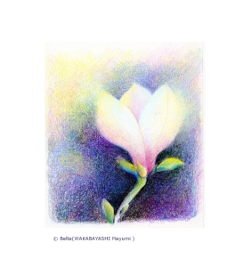 2014_03_26_magnolia_01_s 木蓮 もくれん