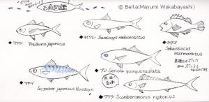 2016_03_19_fish_01_s