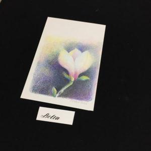 2014_03_26_magnolia_02_s