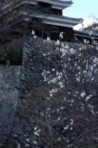 松江城山公園の梅