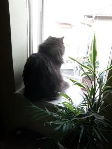 窓辺のふぁ。こっち向いて。