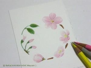 塗り絵 桜のリース