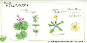 2014_01_04_hotokenoza_01_s